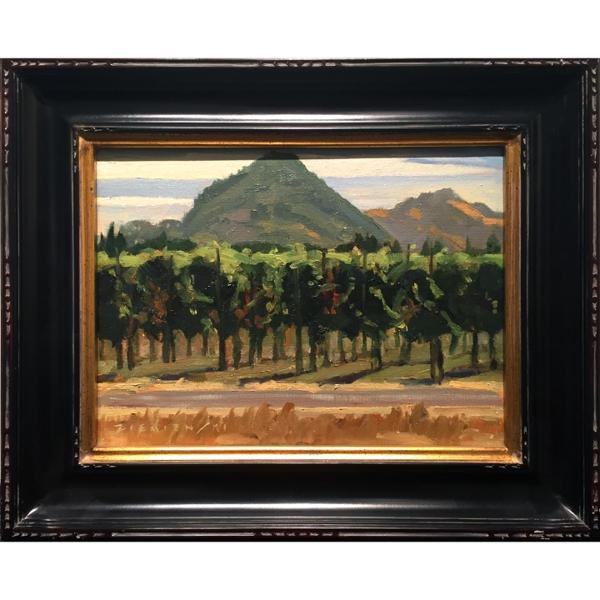 Grenache Vines