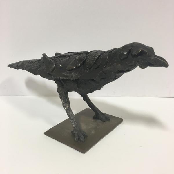 Jupiter Blackbird 11/12